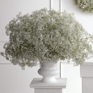 Baby\'s Breath Urn Arrangement